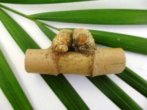 bambu petuk pelarisan usaha dagang